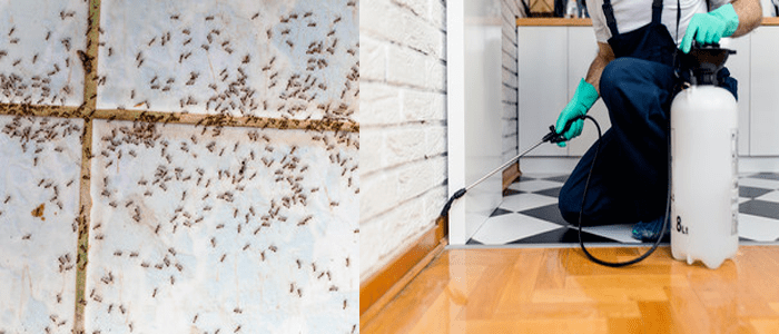 Affordable Ants Control Service