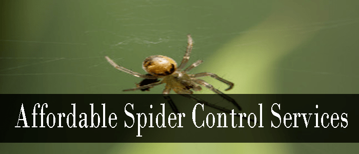 Affordable Spider Control Services