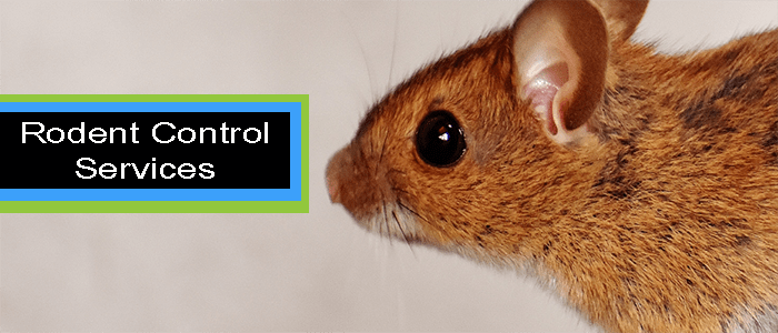 Best Rodent Control Service