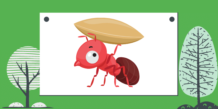 Dangers Ants Pose To Your Home And Health